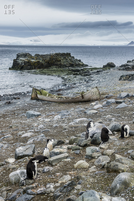 Penguins on shore of Half Moon Island with abandoned rowboat in background