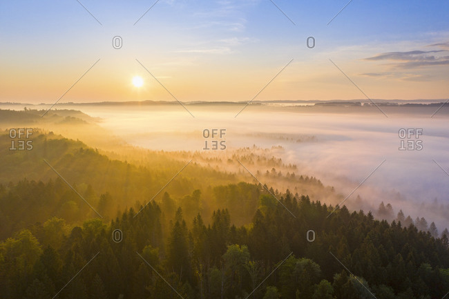 Germany- Bavaria- Icking- Drone view of countryside forest at foggy sunrise