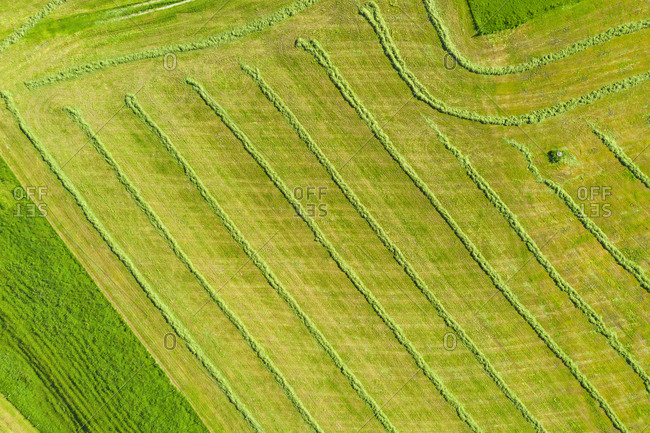 Drone view of green mowed field in spring