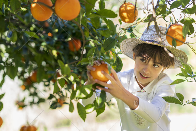 Little girl helping mother with the orange harvest