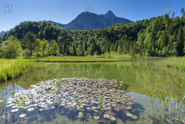 Germany- Bavaria- Fussen- Water lilies growing on lakeshore in Schwansee Park
