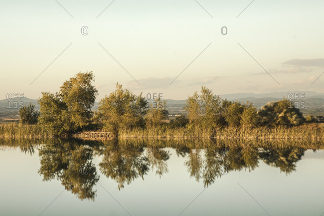 Scenic view of calm swamp and trees against clear sky during sunset
