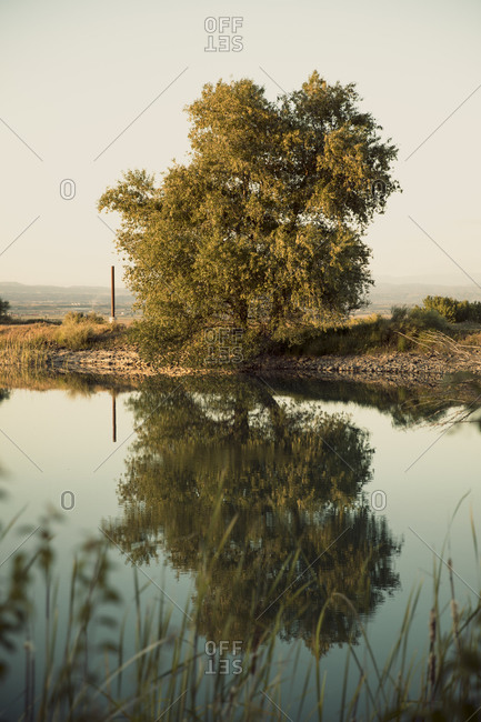 Tree reflecting on calm swamp against clear sky during sunset