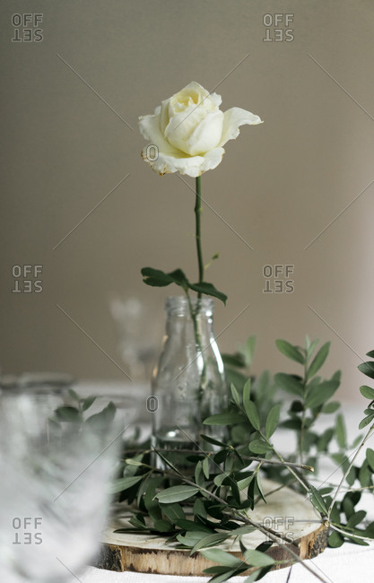 Dining table decorated with white blooming rose and olive tree branches