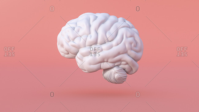 Three dimensional render of human brain