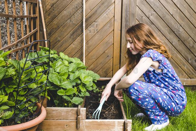 Girl planting basil in raised bed at yard