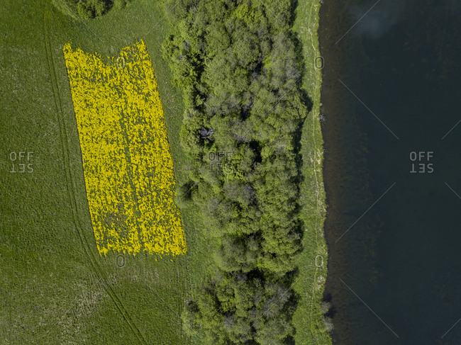 Russia- Moscow Oblast- Aerial view of green lakeshore grove and yellow flowerbed in spring