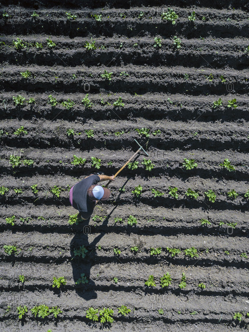 Aerial view of man working on potato field