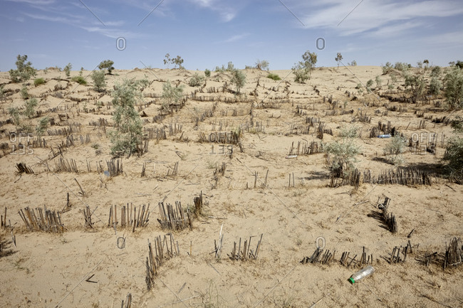 Stabilization of shifting sands by planting shrubs around settlements in the Central Karakum Desert, Turkmenistan