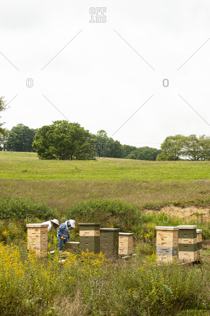 Beekeepers working with beehives in a field
