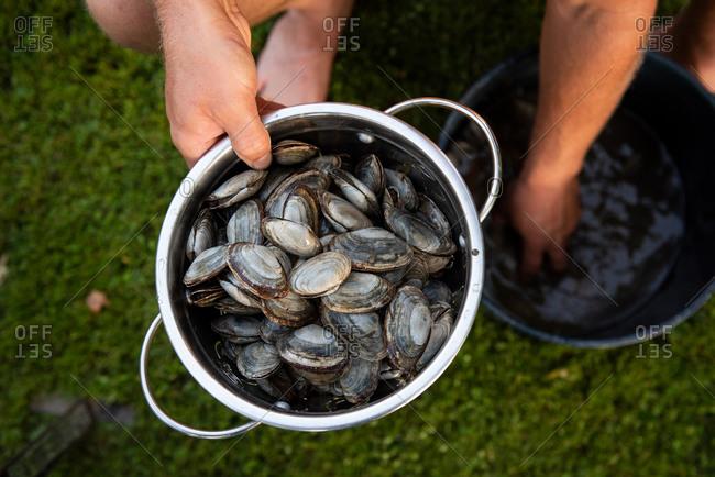 Strainer full of fresh clams