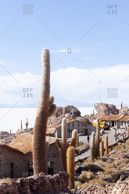 Cactus and buildings in the Incahuasi island, Uyuni salt-flat in Bolivia, South America