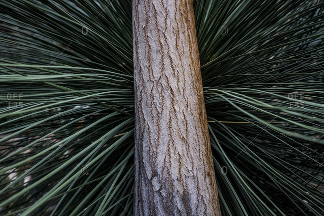 A tree trunk and spiny leaves at the Botanical Gardens in Berlin, Germany