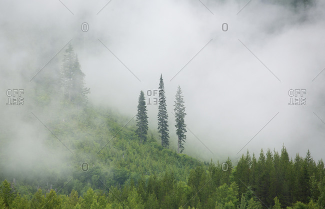 Fog over forest in the Canadian Rockies, Banff National Park, British Columbia, Canada