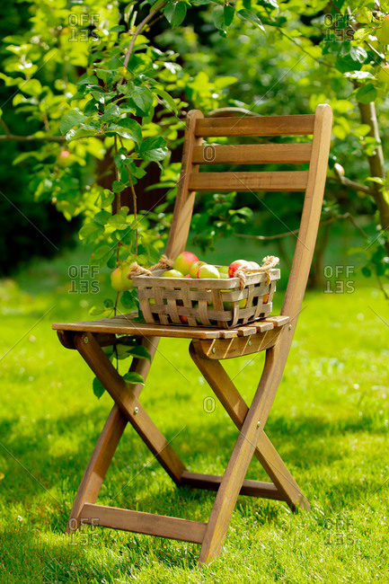 Bio apples in a box and on a chair near apple tree in a garden