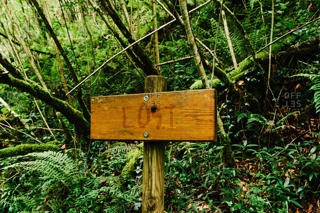 Shabby wooden sign with inscription lost placed in woods and surrounded by trees