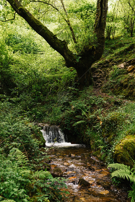 Picturesque scenery of river with clean water surrounded by mossy stones and located in woods in Asturias