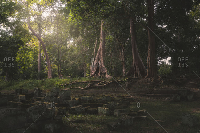 Breathtaking view of jungles with tall trees and stones during daytime in Cambodia