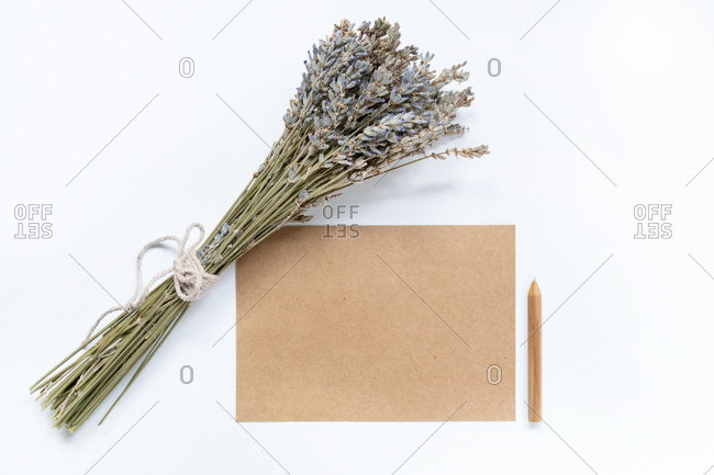 From above of bunch of fresh lavender flowers placed on white background near blank sheet of craft paper in creative workspace