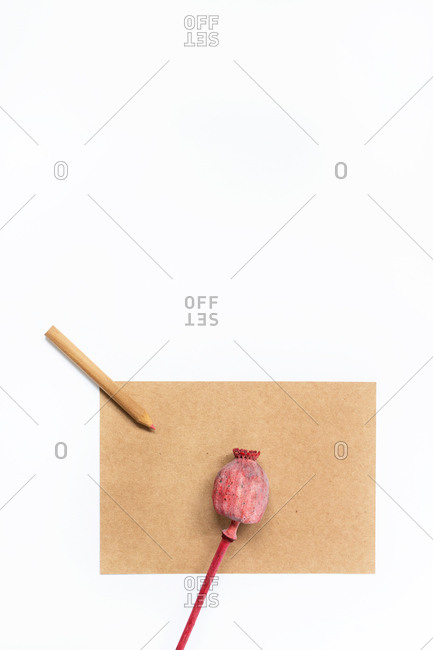 Top view of creative workspace with sheet of craft paper and pencil placed on table with bud of papaver flower in studio