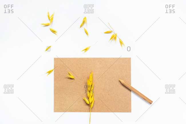 Top view of craft paper and pencil arranged on white table with spica seeds in studio