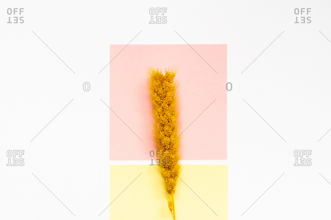 From above of sprig of dry wheat placed on white table with pink and yellow sticky notes