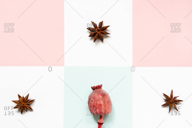 Top view of composition of dry star anise and dry rose hip on thick stalk in center