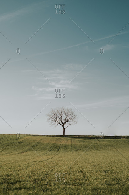 Amazing scenery of lush agricultural field with dry tree on background of blue sky in countryside