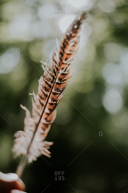 Crop person with striped feather of bird in green garden during daytime