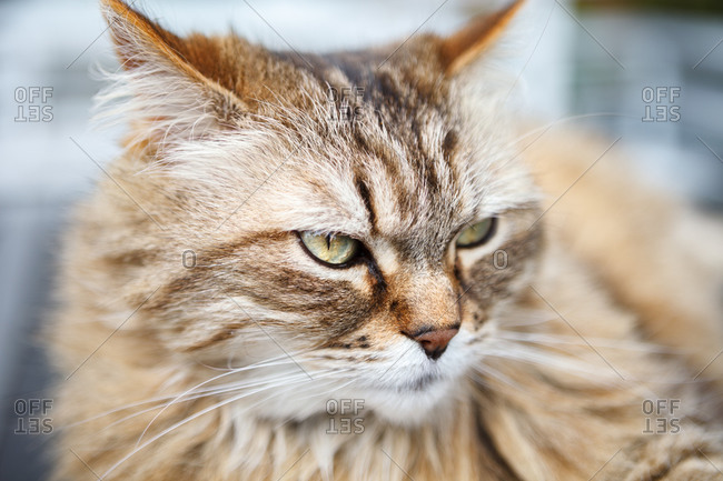 Closeup of adorable cat with fluffy muzzle relaxing at home and looking away