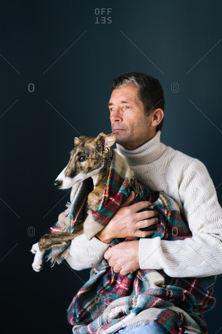 Adult man in sweater looking away and embracing adorable Whippet dog in checkered blanket while sitting against gray background
