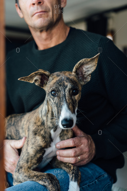 Crop unrecognizable mature male owner and cute Whippet dog looking at camera while resting at home together