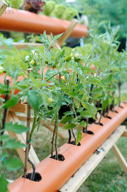 Rows of PVC tubes serving as flowerbeds placed on wooden triangle holder in green summer garden on sunny day