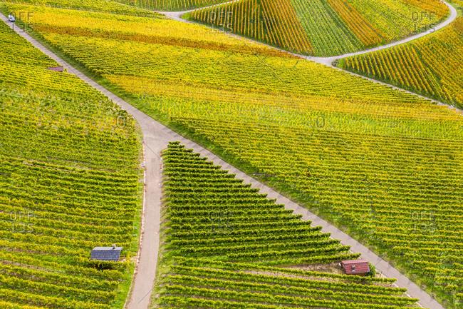 Drone shot, autumn, vineyards near Strumpfelbach, Remstal, Baden Wurttemberg, Germany