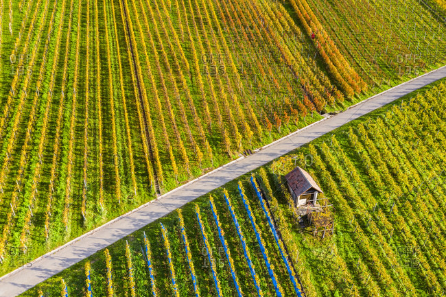 Drone shot, autumn, vineyards near Schnait, Remstal, Baden Wurttemberg, Germany