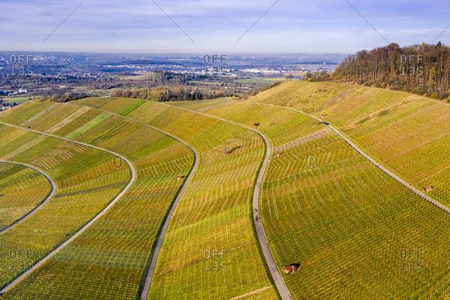 Drone shot, vineyards in autumn, Korber Kopf, Remstal, Baden-Wurttemberg, Germany, Europe