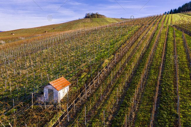 Drone shot, vineyards in autumn, near Strumpfelbach, Remstal, Baden-Wurttemberg, Germany, Europe