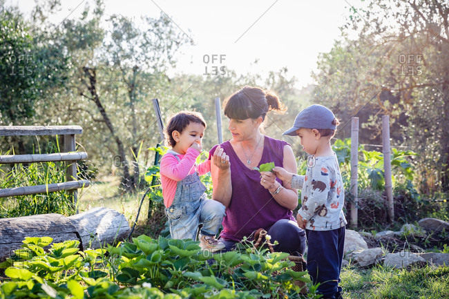 Adult woman giving herb leaves to kids while spending time on sunny day on farm in Tuscany, Italy