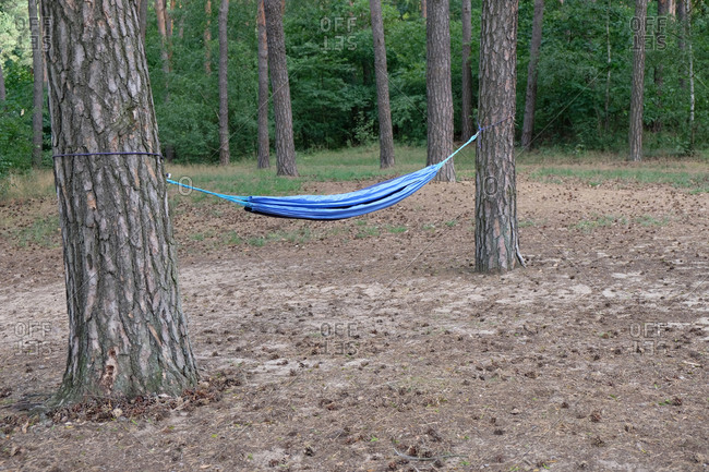 Blue hammock tied to trees in the forest