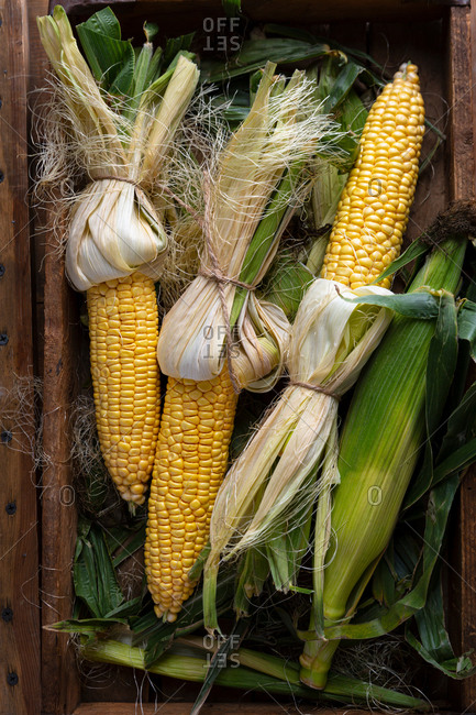 Top view of fresh corn on the cob in wooden crate