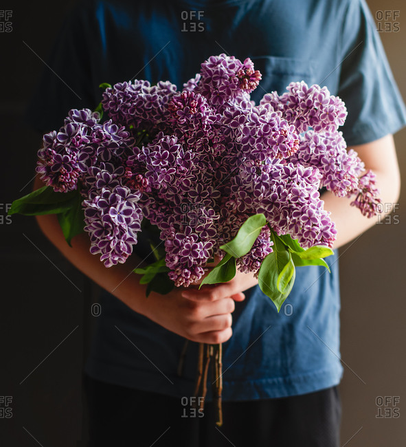 Cropped image of child's hands holding bouquet of lilac flowers.