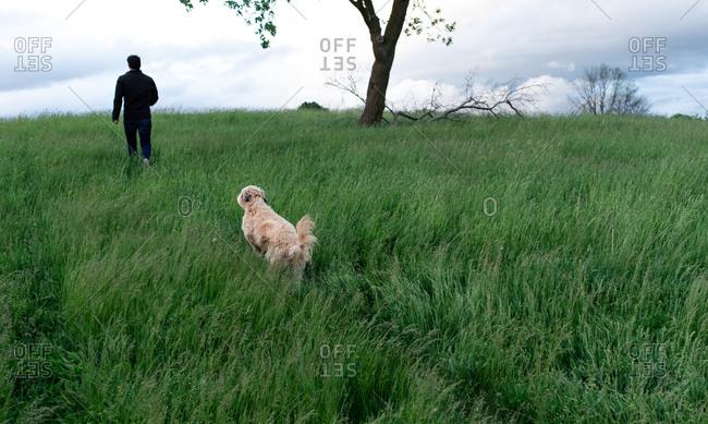 Dog following man through a tall grassy field on a spring day.