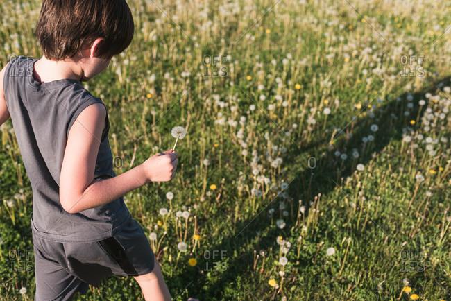 Boy walking through grassy field full of dandelions on summer day.