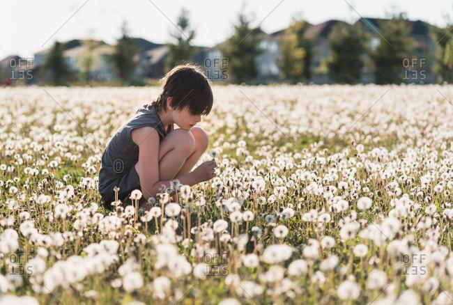 Boy sitting in a grassy field full of dandelions on summer day.