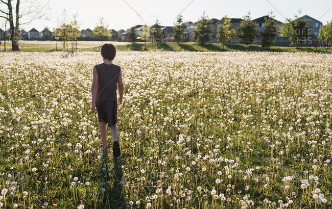 Boy walking in a grassy field full of dandelions on summer day.