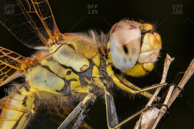 Beautiful macro photography of dragonfly