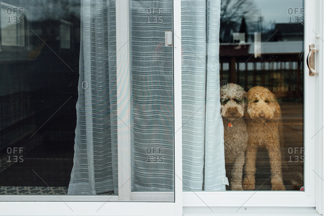 Dogs at backdoor looking out