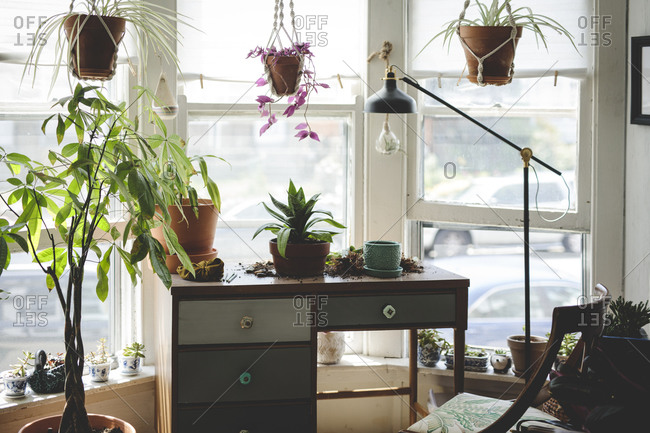 Desk in bright study with plants and large windows