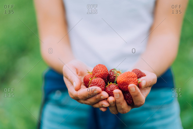 Girl is holding ripe red strawberries at a u-pick farm