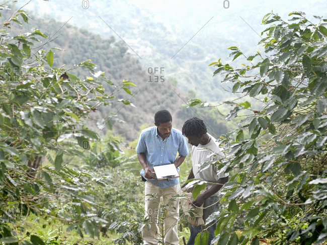 Manager and worker with view of coffee estate on coffee farm in the Blue Mountains, Jamaica.